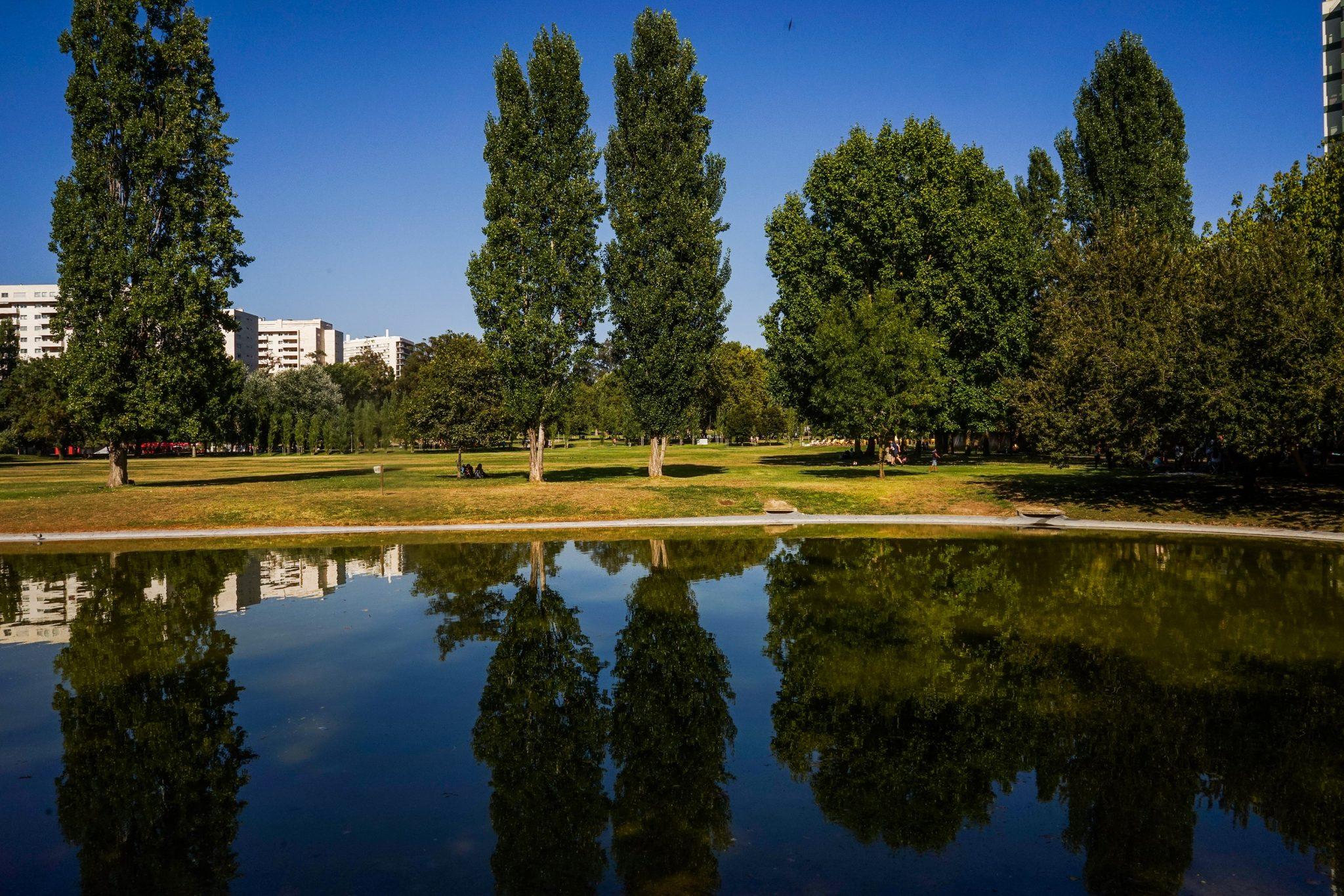 Jardim com árvores e lago